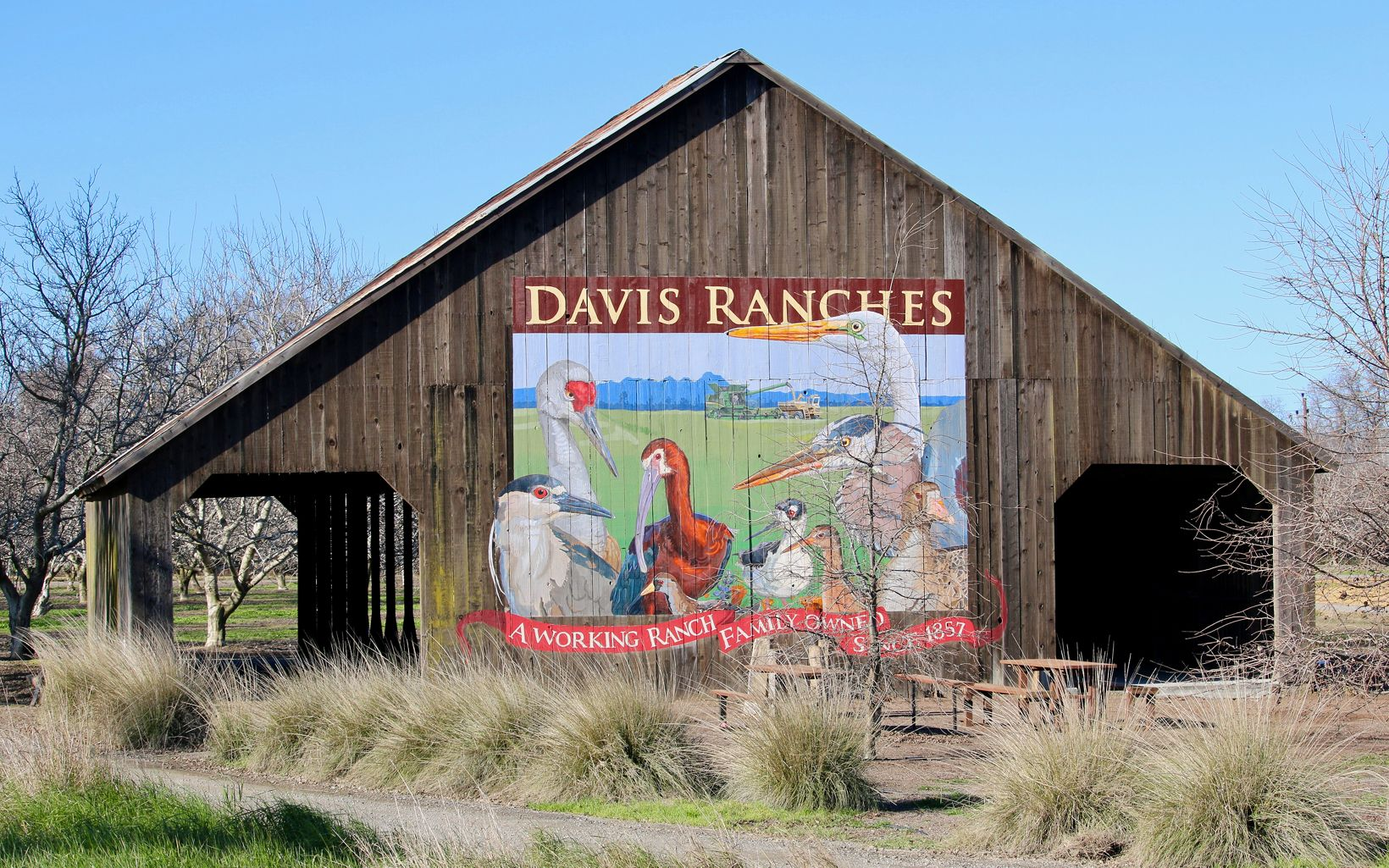 Davis Ranches, one of TNC's pilot partners in California's Central Valley has implemented the type of work Cascadian Farms is funding since 2019.