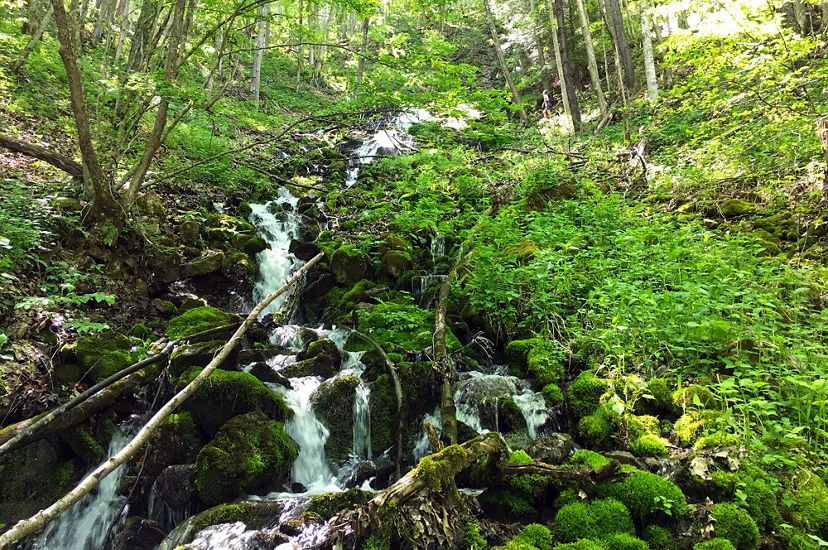 White water of a narrow stream cascades down a mountain side over rocks, downed branches and thick green vegetation.