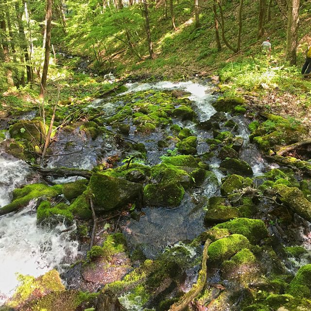 A wide mountain stream breaks into smaller rivulets as if flows over large moss covered rocks.