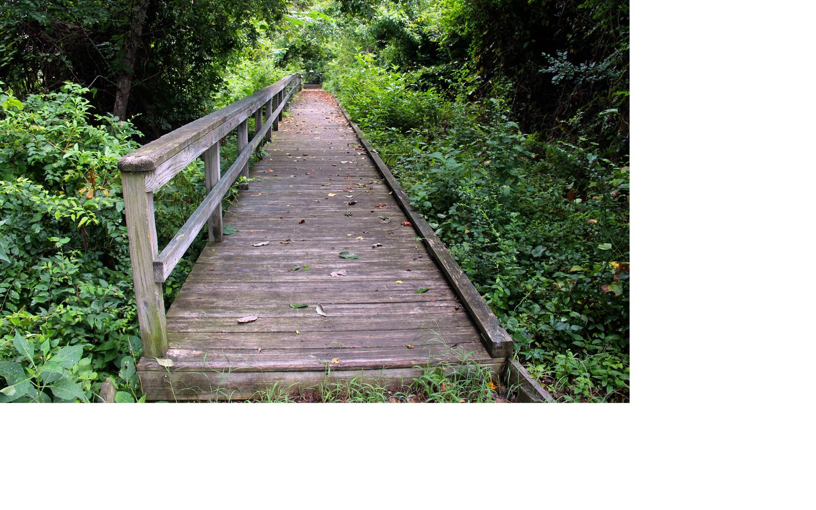 A wooden boardwalk offers a straight path over the marsh and deeper into the woods.