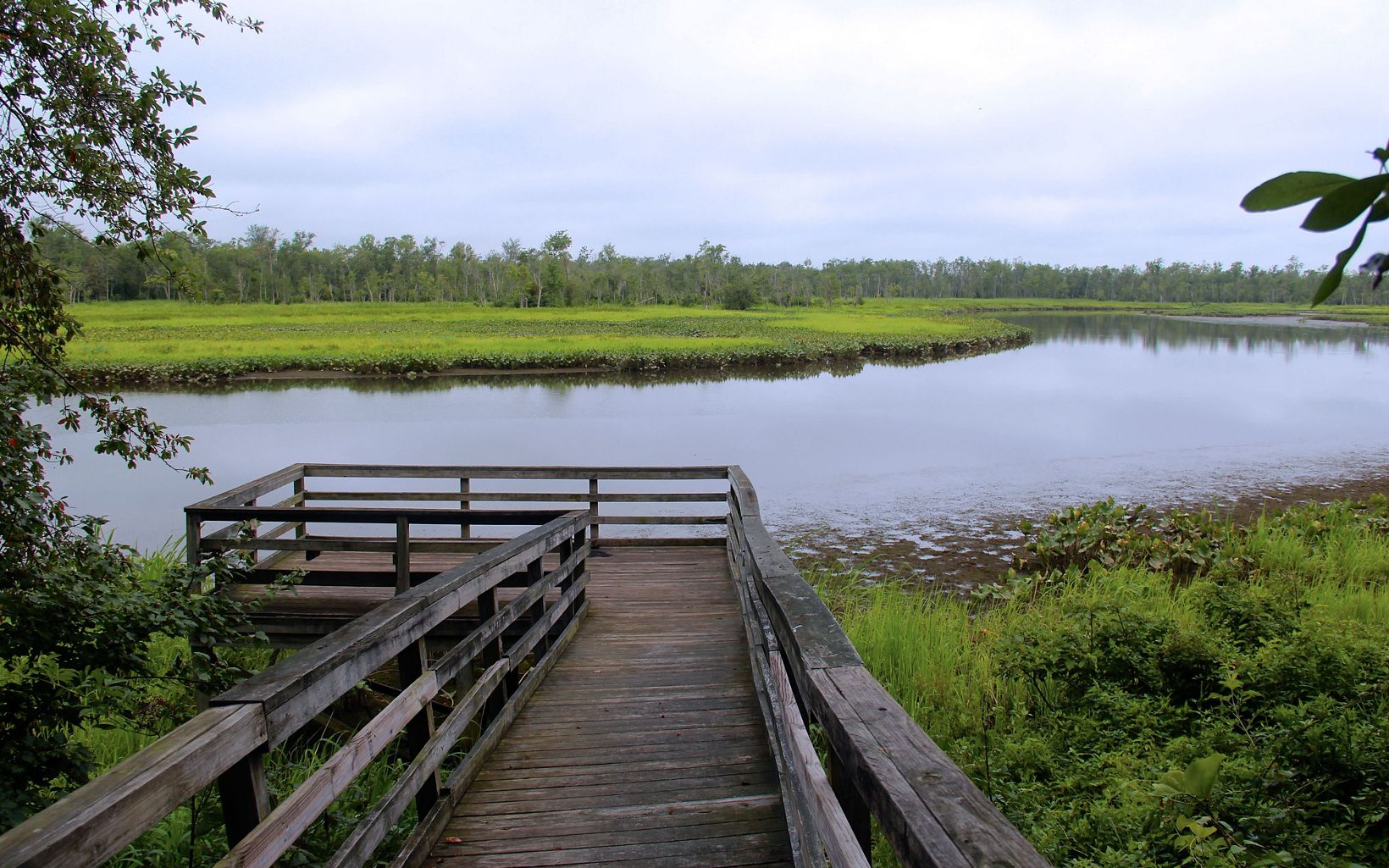 A wooden boardwalk ends at an observation deck offering unobstructed views of the marsh. Open water curves around thick wetland vegetation and a tall stand of trees.