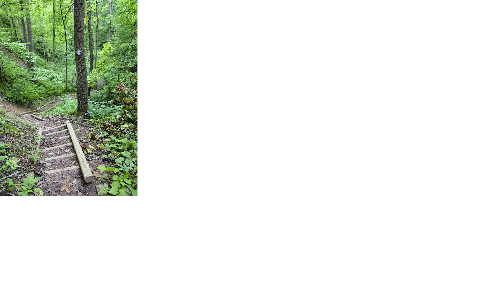 A sea star sitting on a kelp frond underwater.