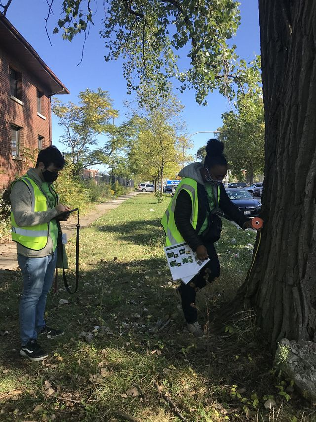 Two researchers measure a tree on a city street.