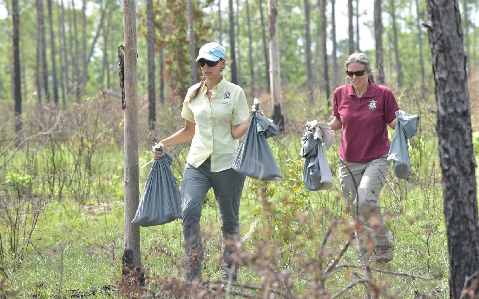 Partners carry the snakes in canvas bags to their release sites on the preserve.