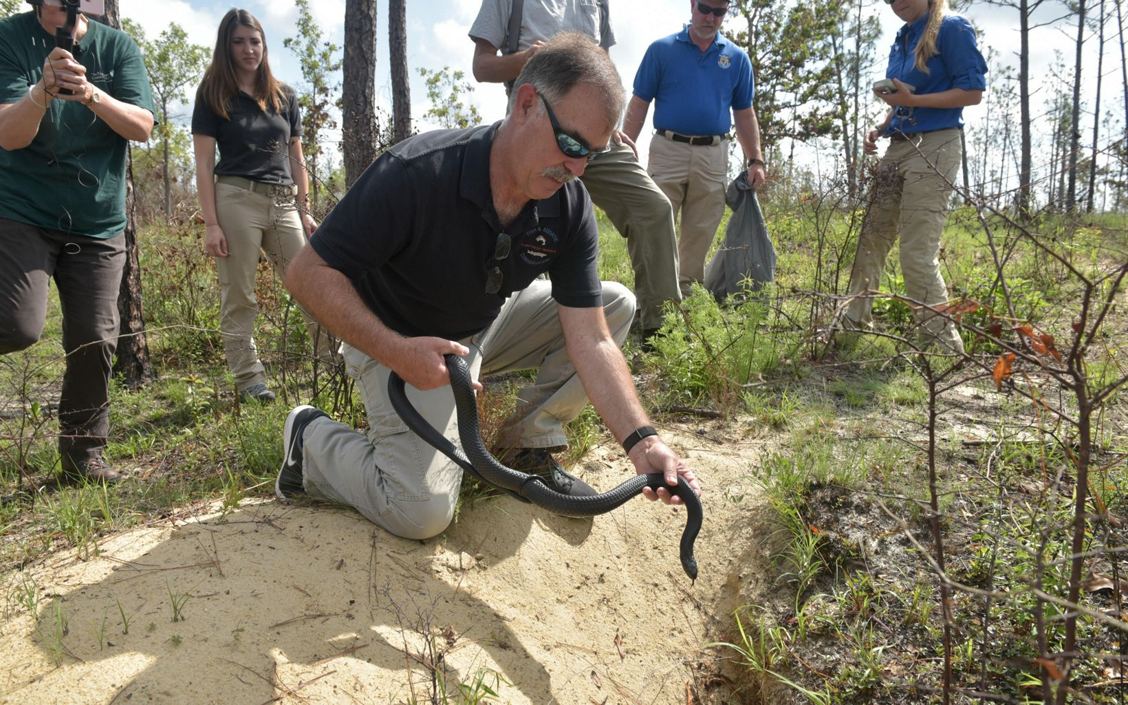 Easing the indigo snake into a gopher tortoise burrow on the preserve.