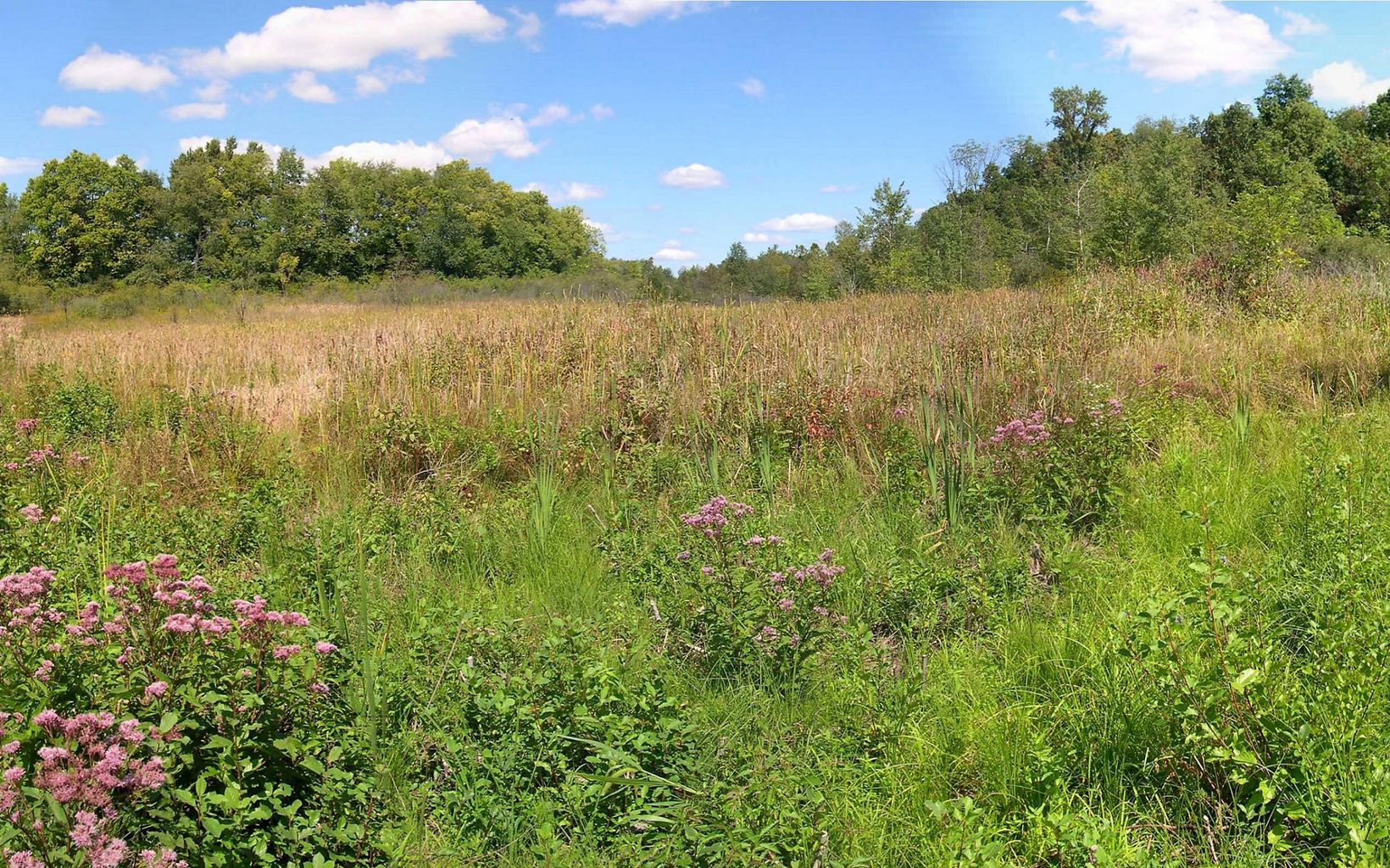 An alkaline spring-fed prairie blends into a floodplain forest to create a globally significant fen habitat at Ives Road Fen Preserve.
