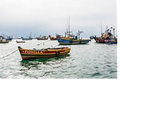 Fish market and harbor in Ancon, Peru, just north of Lima on the Pacific coast.