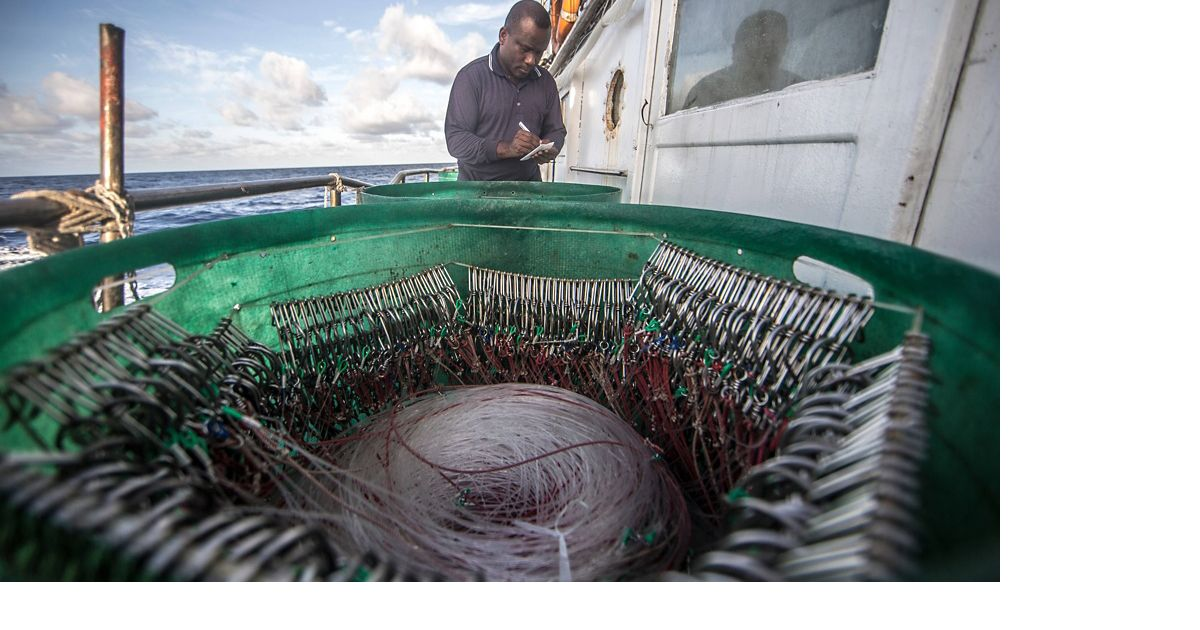 A fishery observer is a trained technician who lives on board a fishing vessel to collect information about the boat's catch.