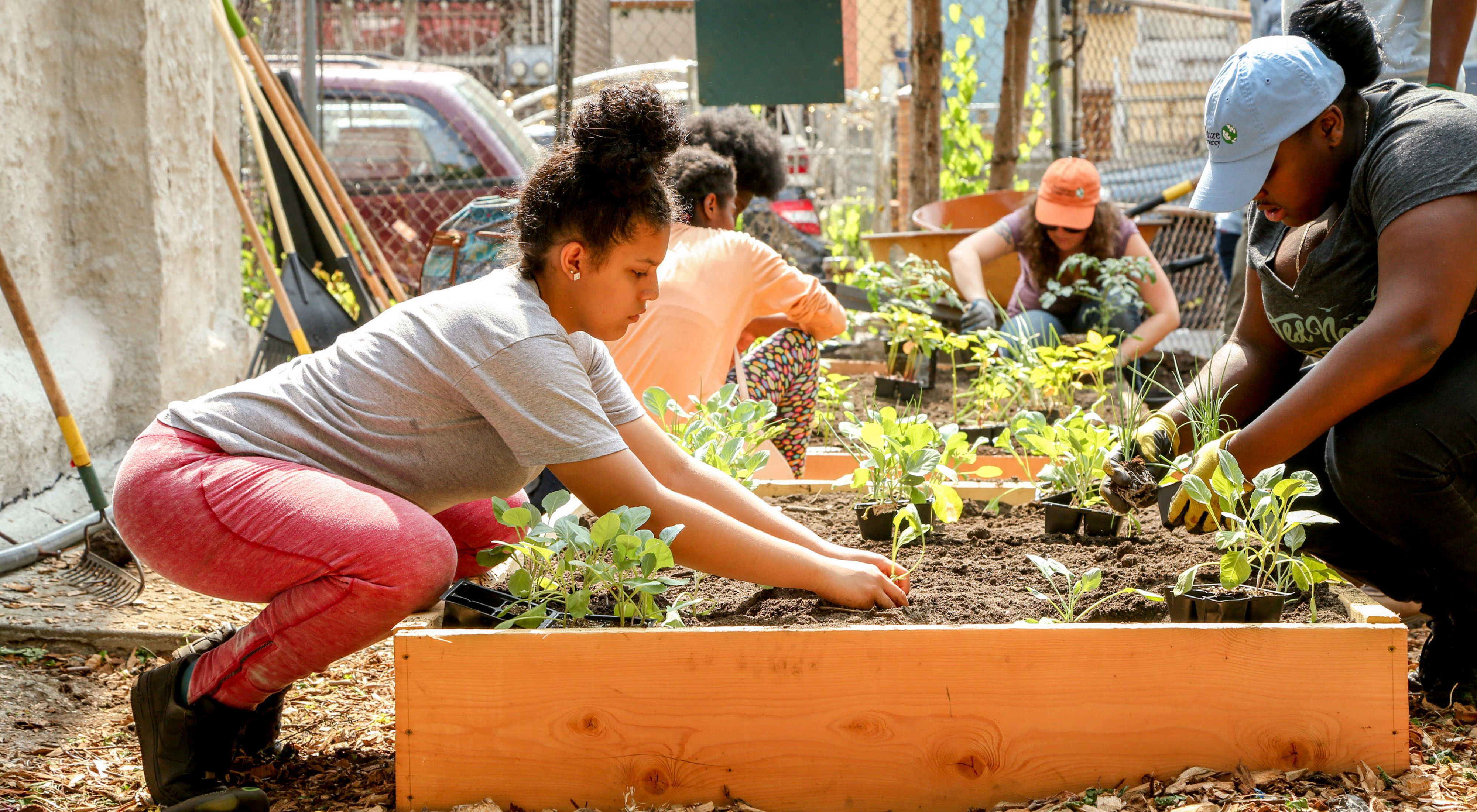 The Nature Conservancy installs a community garden in Brooklyn, New York.