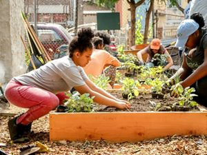 Several people plant a garden in small raised boxes.