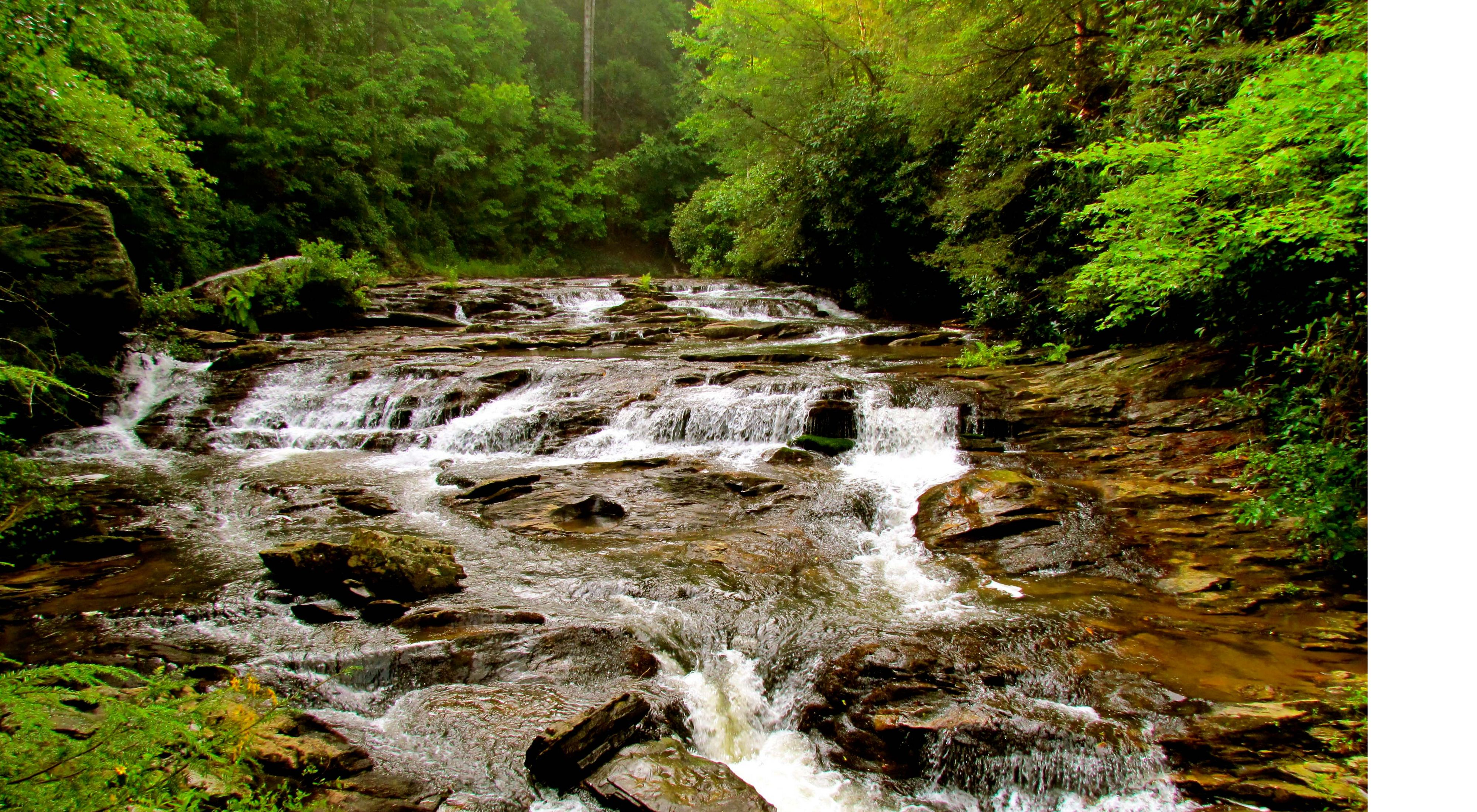 Water cascades through the dense wilderness in the Chattahoochee National Forest in Georgia.