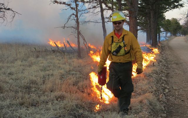 Man using drip torch to set a controlled burn.