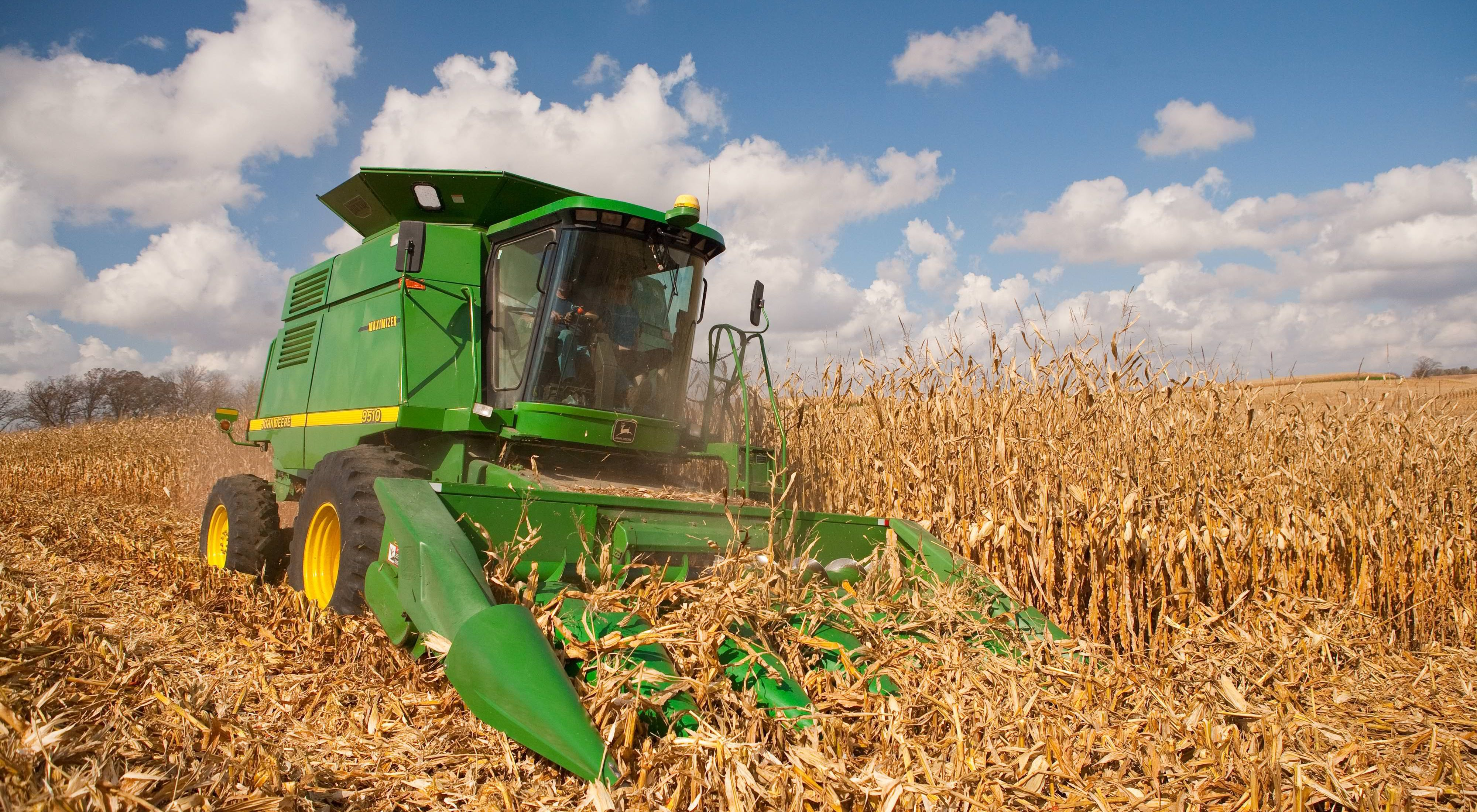 A man operating a combine in a corn field.