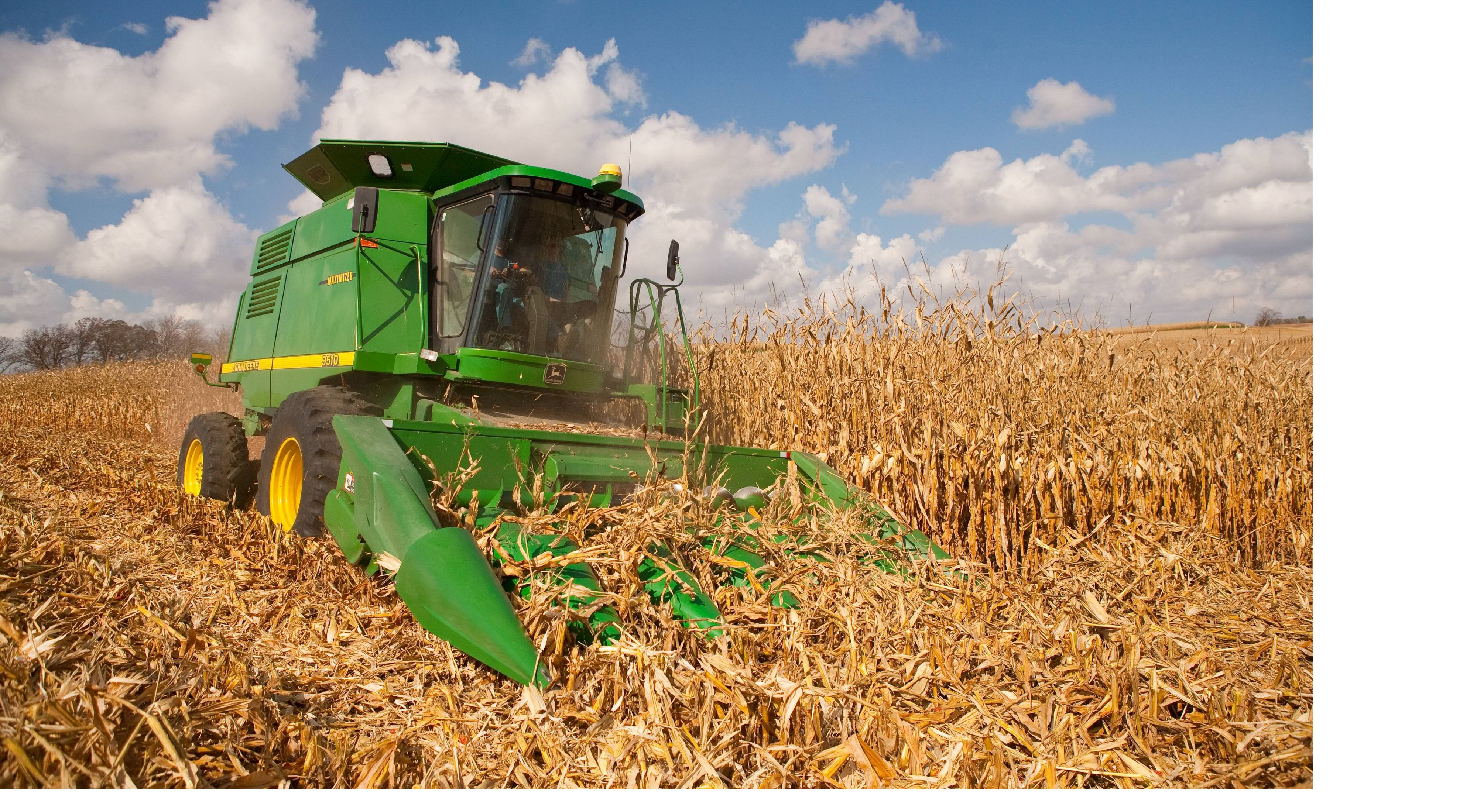 Bright green tractor in a cornfield on a sunny day