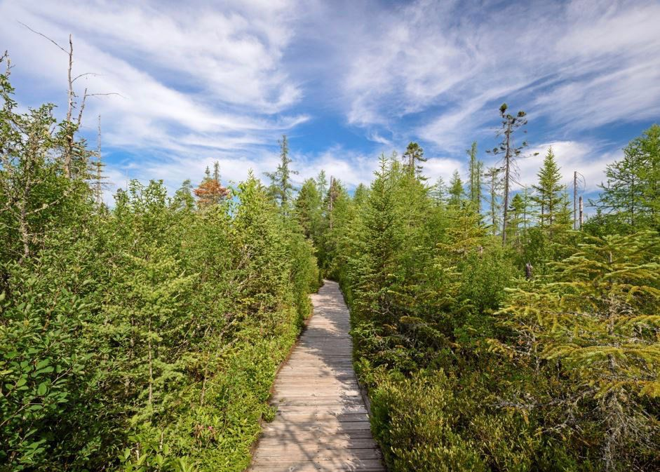 A view from above a brown boardwalk going through green vegetation and trees on each side of the path, with a blue sky and clouds in the background.