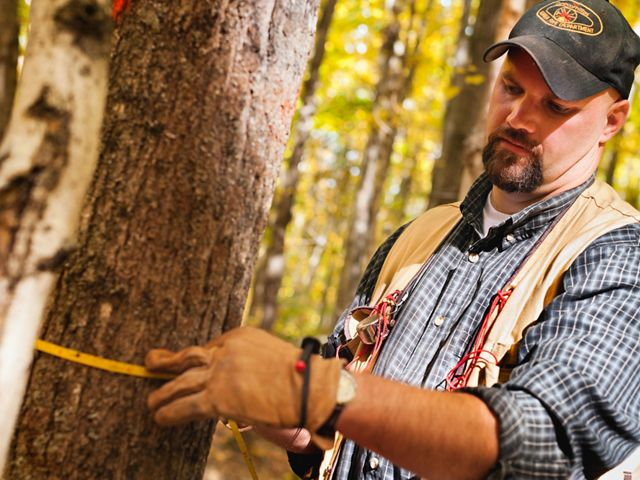 Forest manager Jon Fosgitt holds a measuring tape wrapped around the trunk of a small tree and reads the measurement.