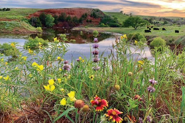 Photo of wildflowers with wetland in background.