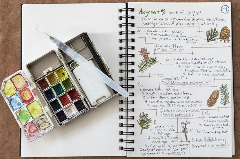 Colored pencils lay on an open journal with nature drawings and descriptions.