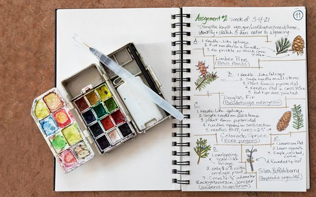 Watercolor tin and nature paintings in an open notebook.
