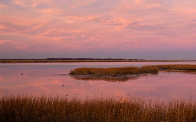 Coastal wetlands play a crucial role as a first line of defense from storm surges.