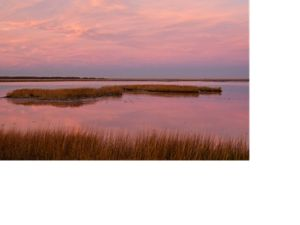 Sunrise casts pink light over a coastal MD wetland.