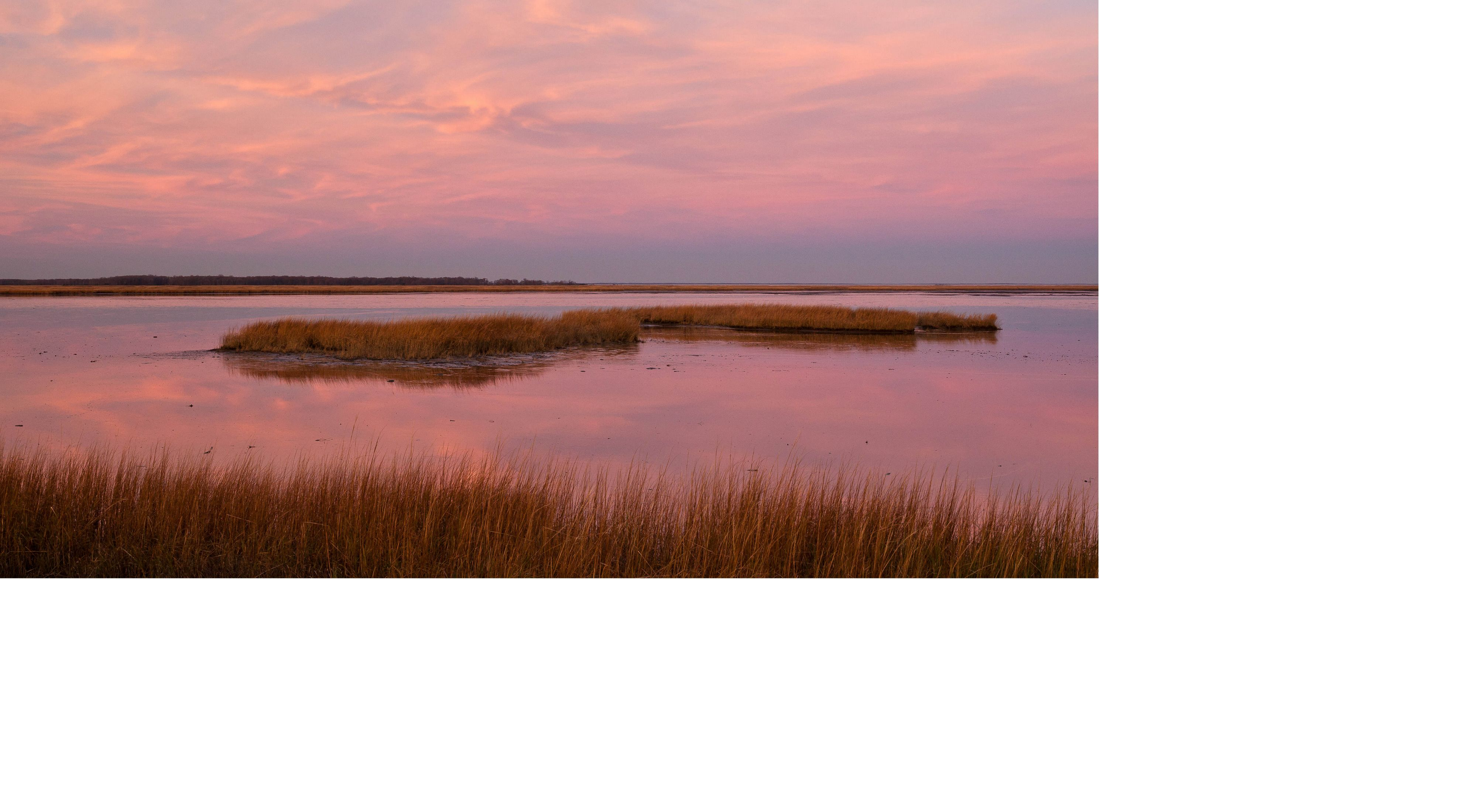 Sun rise casts pink light over a coastal MD wetland.