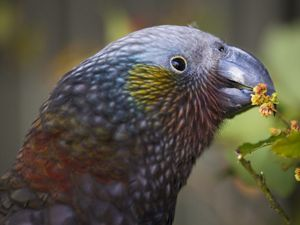 A parrot is eating a flower.