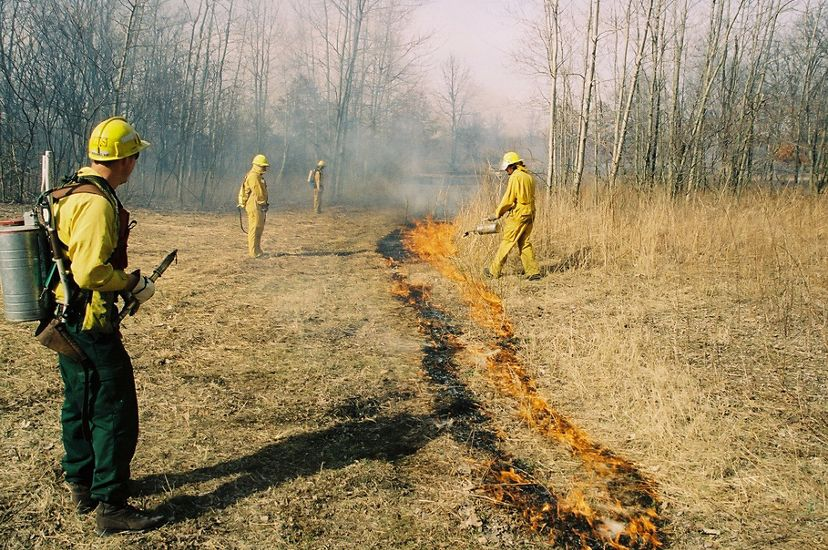 A light brown field of grass, divided in the center by a stripe of low flames and black ground as 4 people watch the fire.