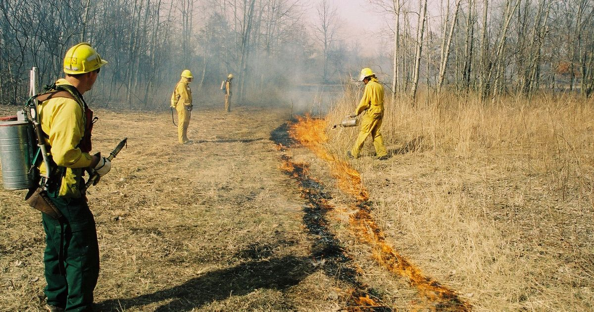 Trained staff perform a prescribed burn during fall to help aid the health of prairie and forest habitats.