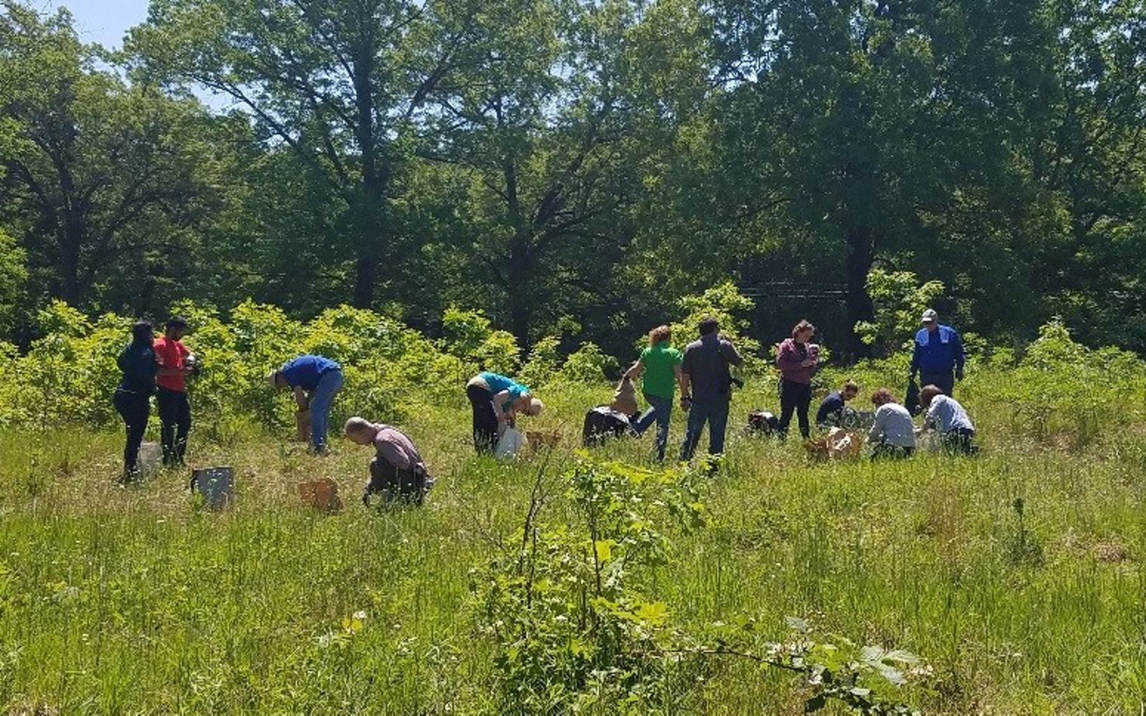Volunteer Day, native seed collection.