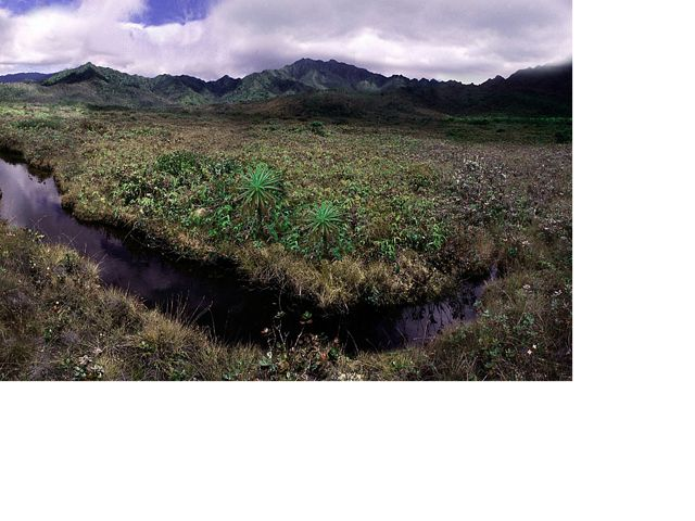 TNC has worked to restore the unique ecosystem of Kanaele Bog, Kaua'i.