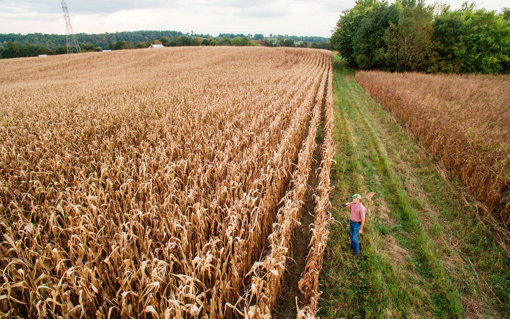 View from above of a corn field with a farmer standing next to it.