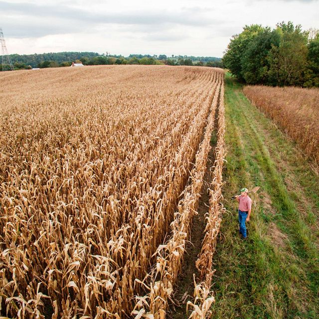 A farmer stands among rows of crops and a grassy field.