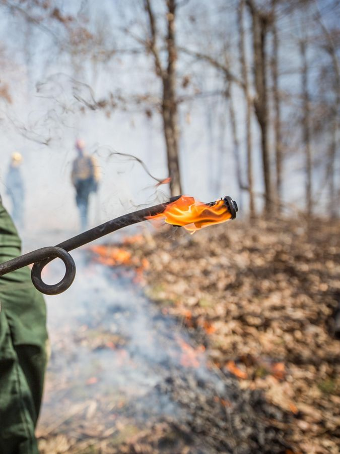 The fiery tip of a prescribed fire ignitor.