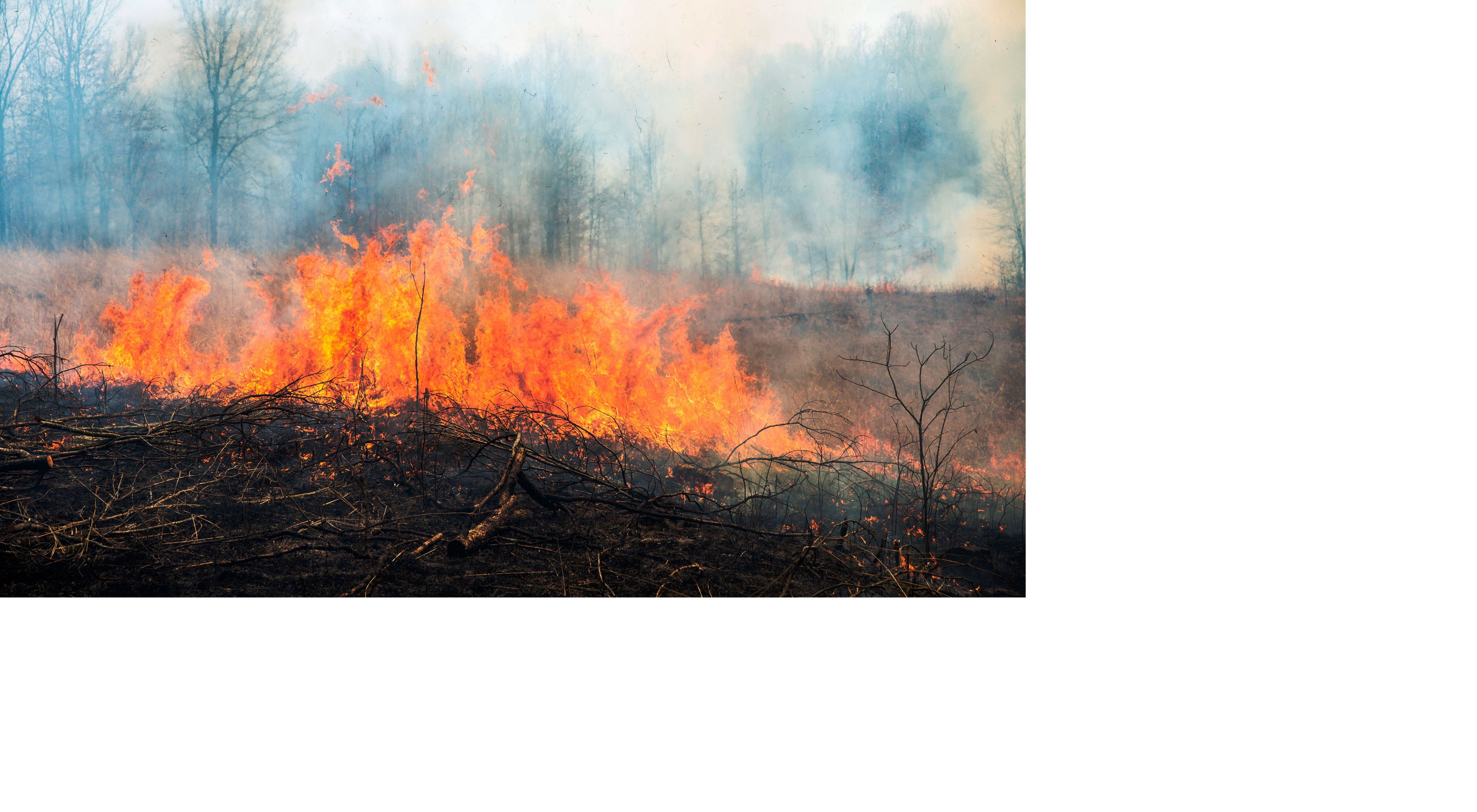 A controlled burn on a grassy area.