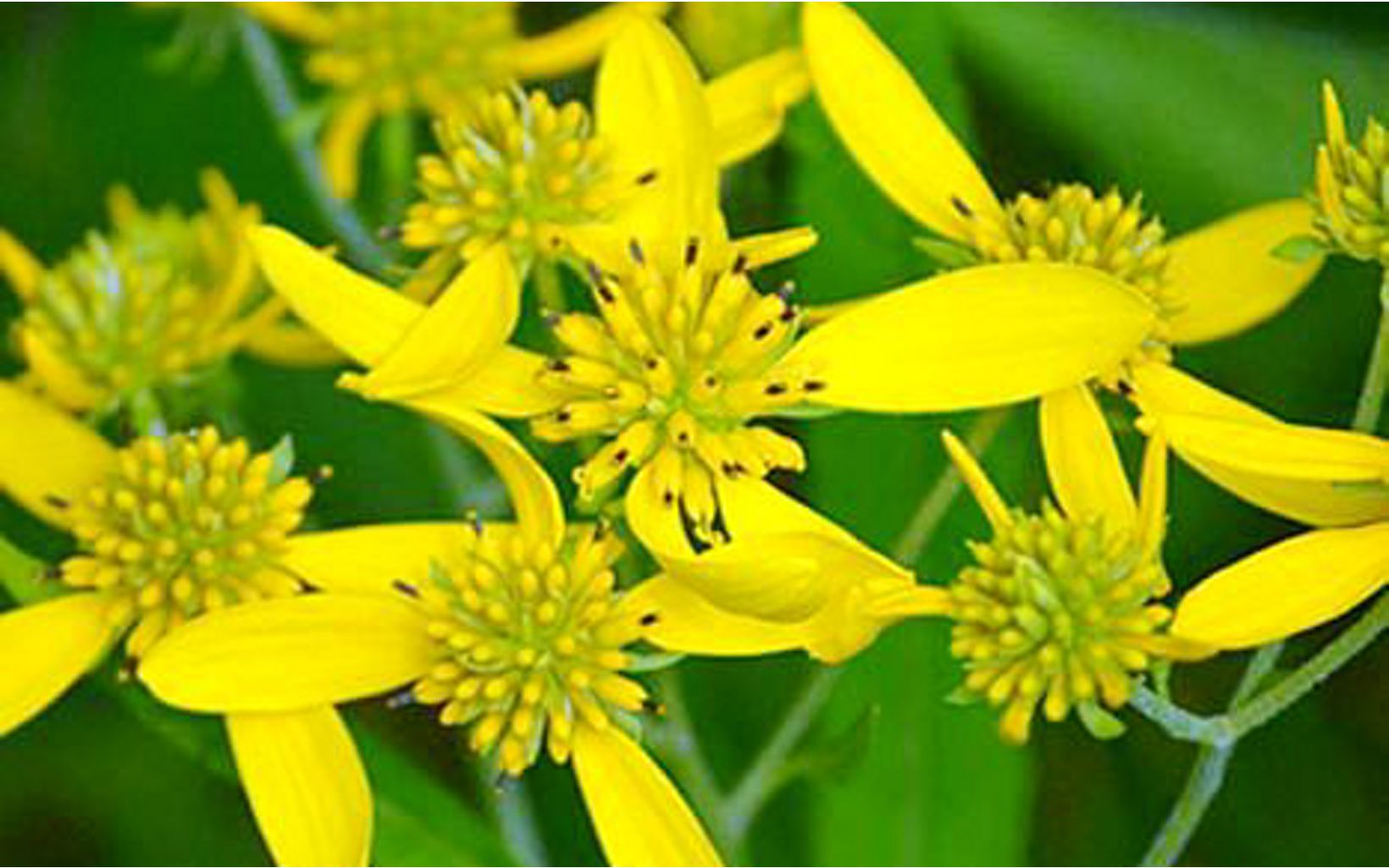 A yellow flower emerges from big green stems.