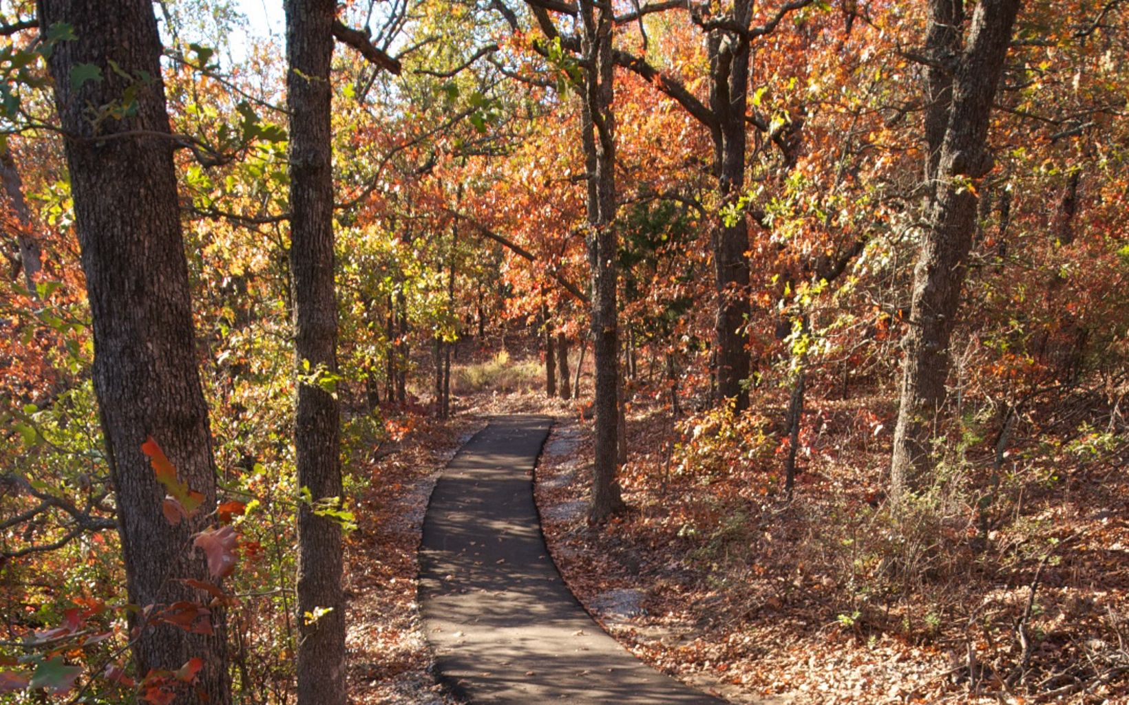 Enjoy a walk among the fall foliage at Keystone Ancient Forest Preserve in Sandsprings, OK.