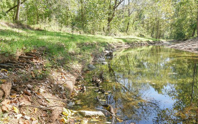 A streambank with growing vegetation and trees.