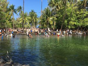 Dozens of people work in shallow water near shore to help restore fishponds in Hawaii.