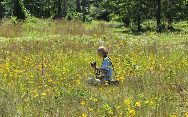 A woman sitting in a field of yellow and purple wildflowers holding a camera.