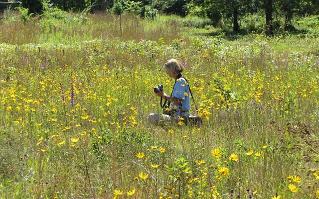 A woman sits in a field of wildflowers, taking photos.