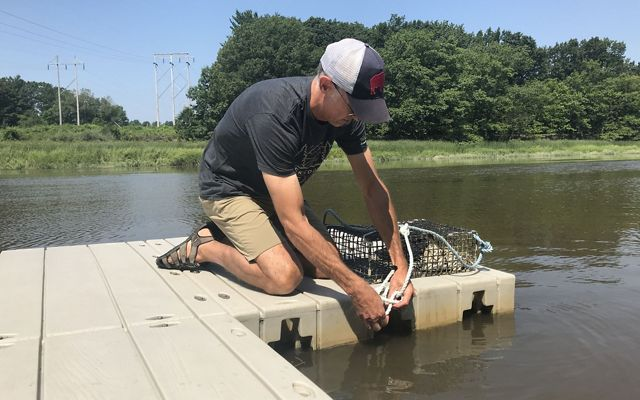 Kyle Hollasch ties his new oyster cage to the dock. His family will care for the oysters within it throughout the summer before placing them on a newly restored reef.