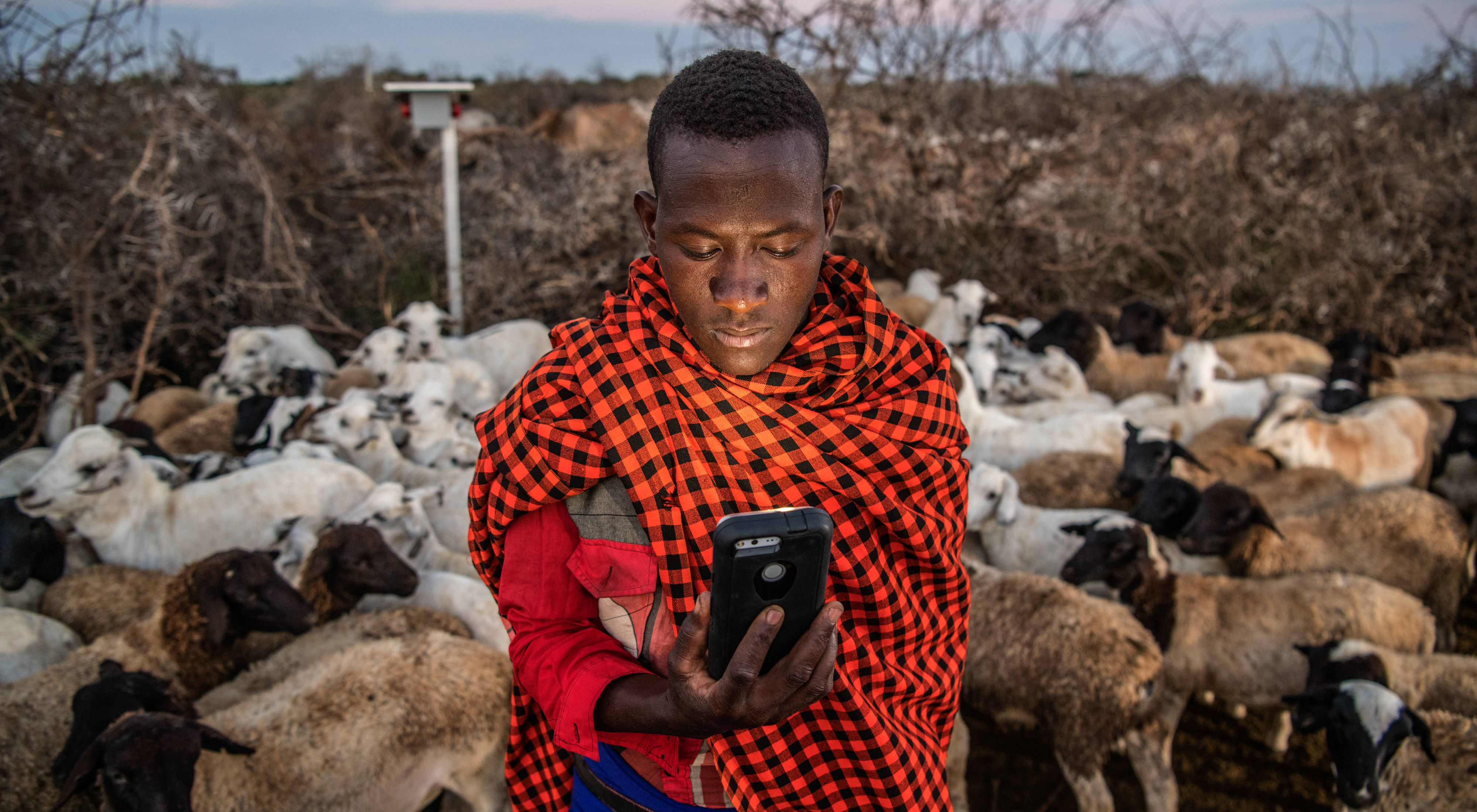 checks lion locations on his mobile app at Loisaba Conservancy in northern Kenya.
