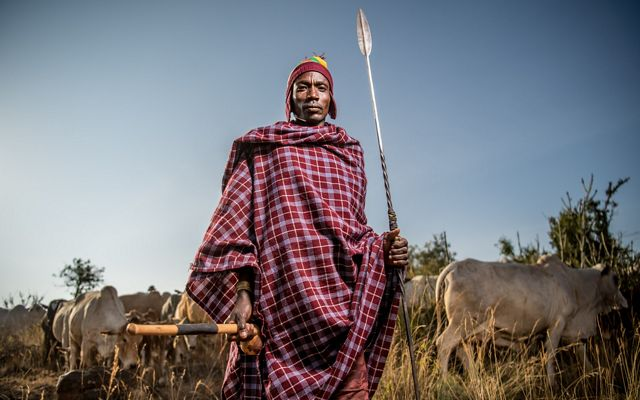 a man stands holding a spear, with a field of cattle behind him