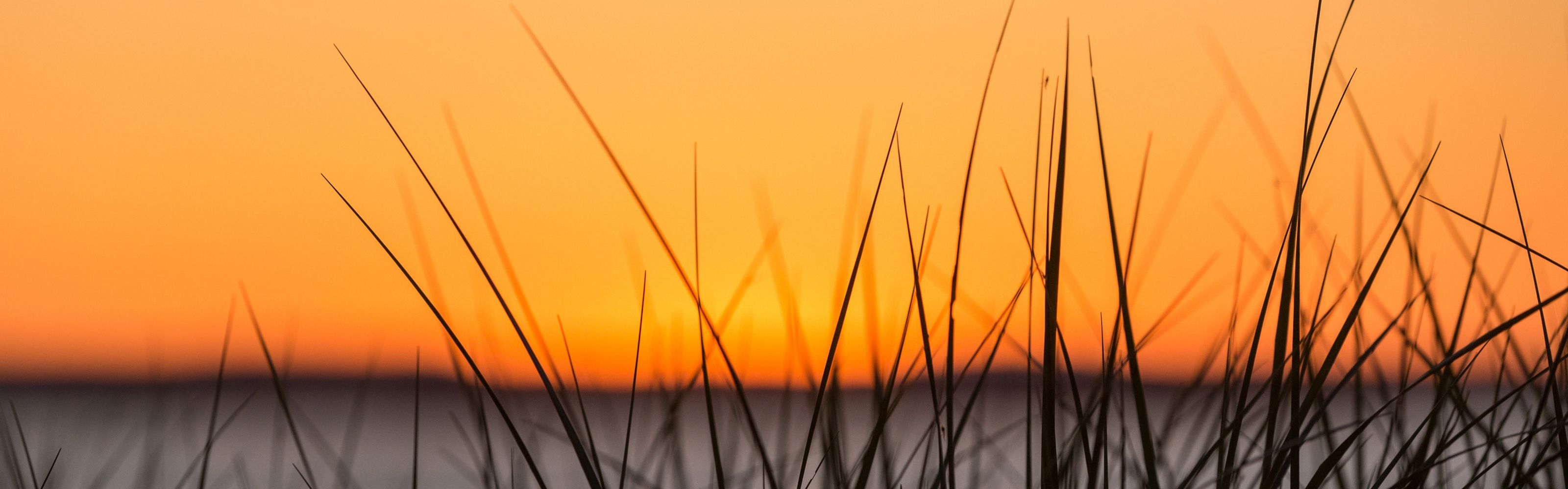 Tall grass in front of a lake at sunset.