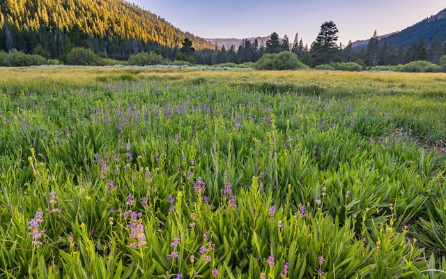 Purple flowers in a grassy valley.