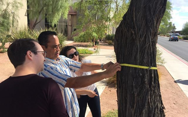 UNLV landscape architecture students evaluate tree health in Las Vegas.