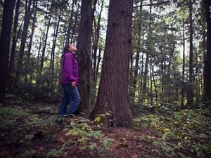 A woman stands in the forest, looking up at the trees.
