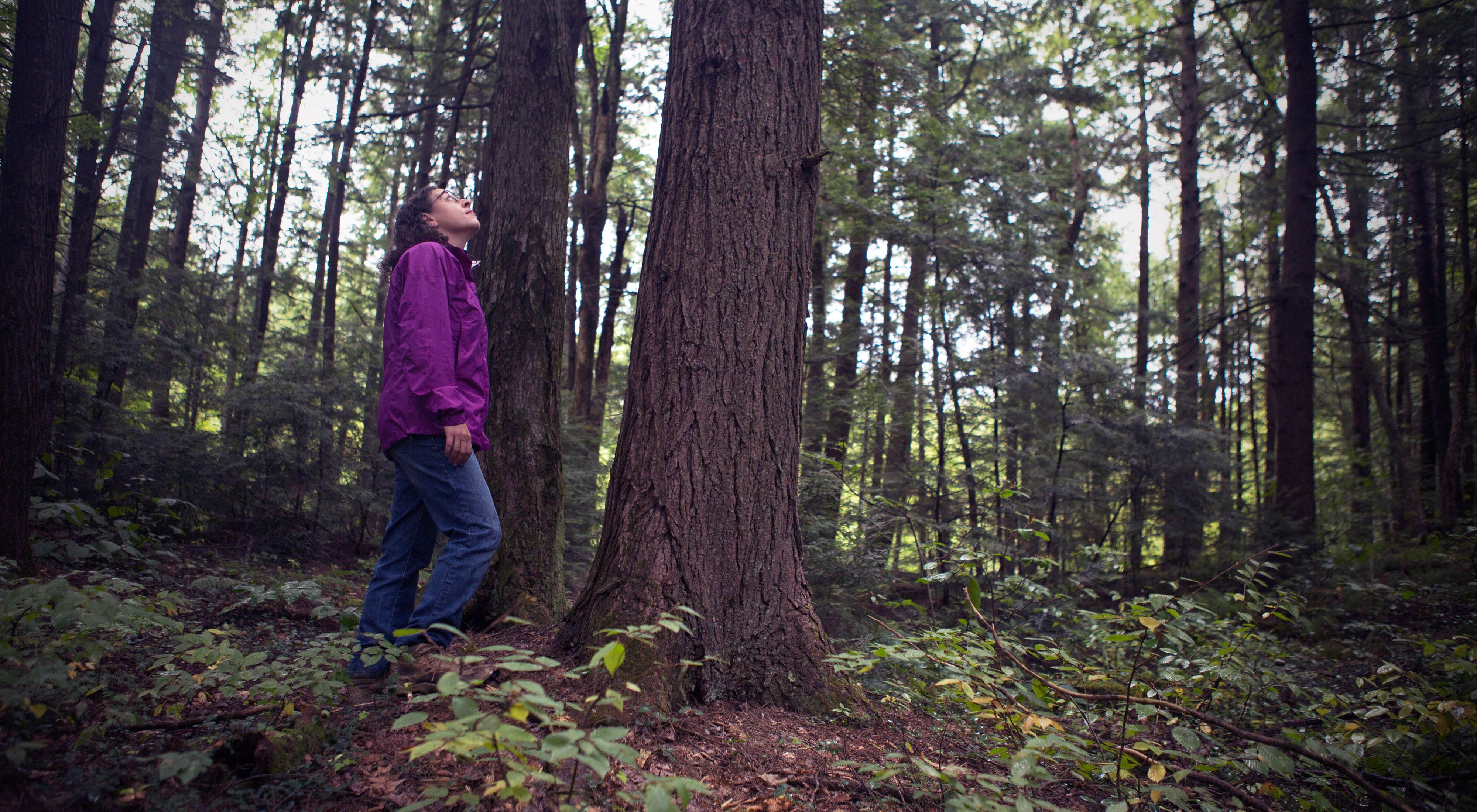 A woman stands in the forest, looking up at the trees
