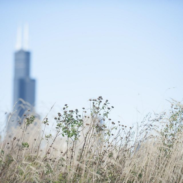 Chicago skyline from Northerly Island Park.